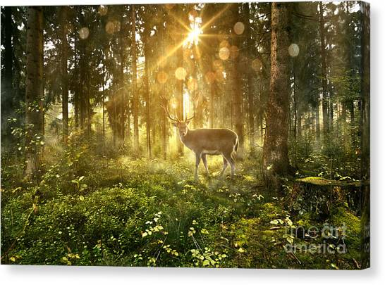 Botany Canvas Print - Sun Shines Into A Fairytale Forest by Lassedesignen