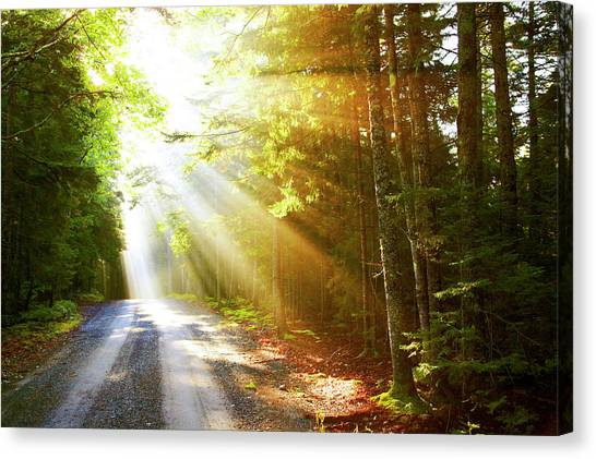 Sunflare On Road Canvas Print