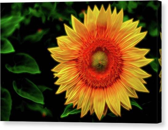 Canvas Print featuring the digital art Sunflower by Kevin McClish