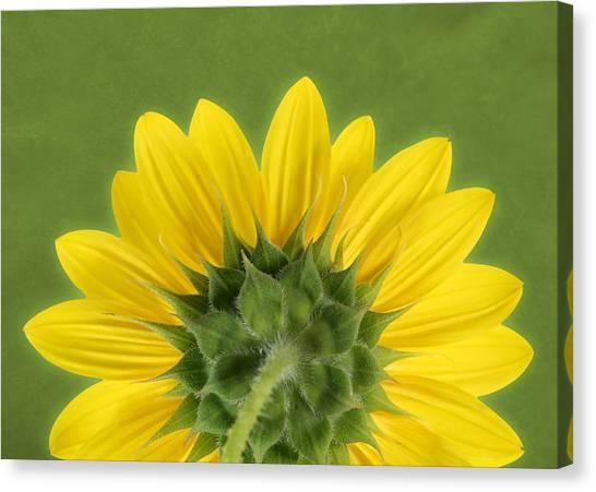 Sunflower Sunrise - Botanical Art Canvas Print