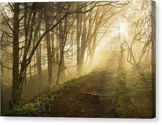 Sunlight Streaming Through Fog Canvas Print by Adam Jones