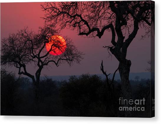 Bush Canvas Print - Sunrise In The African Savanna Kruger by Francesco De Marco