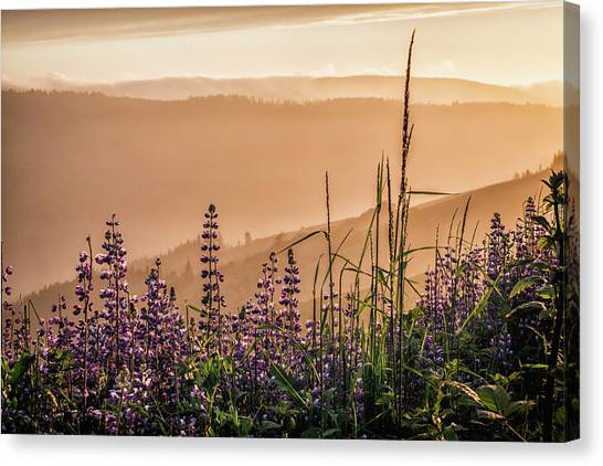 Sunset Among The Lupine Canvas Print