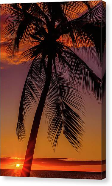 Sunset At The Palm Canvas Print