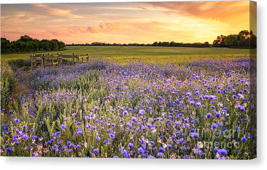 British Canvas Print - Sunset Over A Wild Flowers In Cornwall by Lukasz Pajor