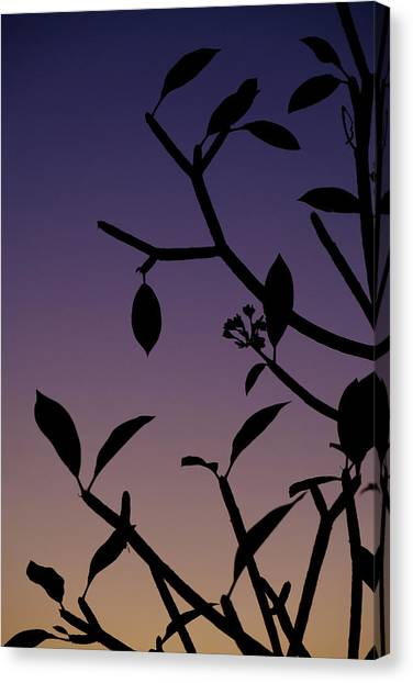Canvas Print featuring the photograph Sunset Silhouette by Nicole Young
