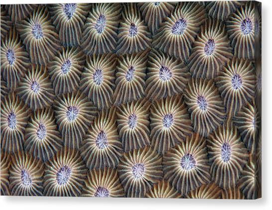 Surface Of Coral Canvas Print by Nature, Underwater And Art Photos. Www.narchuk.com