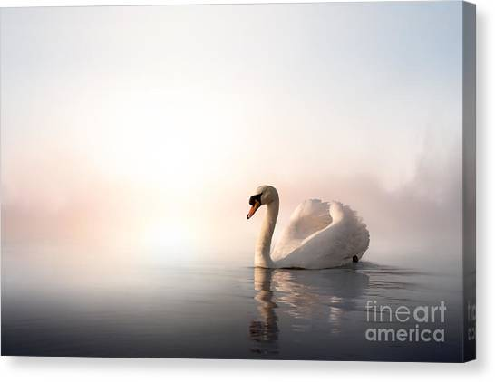 Swan Canvas Print - Swan Floating On The Water At Sunrise by Konstanttin