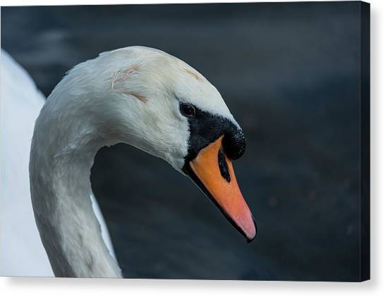 Canvas Print featuring the photograph Swan Head Close Up On Blue Background by Scott Lyons