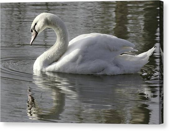 Photograph - Swan On The Lake by Jeremy Hayden