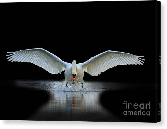 Swan Canvas Print - Swan With Open Wings, A Unique Moment by Drakuliren