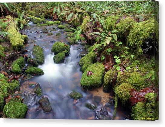 Canvas Print featuring the photograph Sweet Sounds At The Creek by Ben Upham