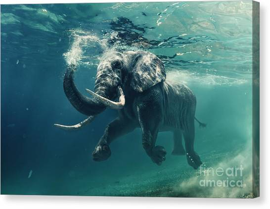Happiness Canvas Print - Swimming Elephant Underwater. African by Willyam Bradberry