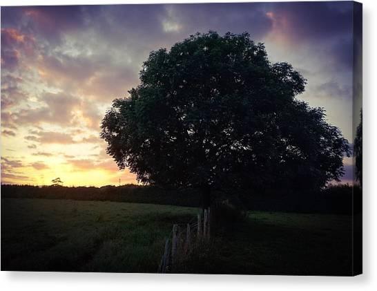 Symme Tree Sunrise Canvas Print