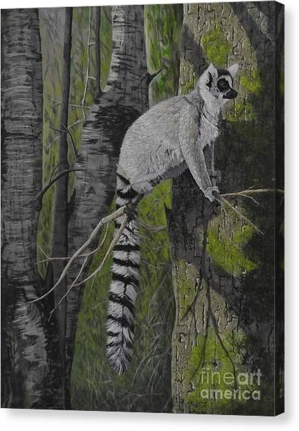 Ring-tailed Lemur Canvas Print - Tall Tale by Fay De Jong