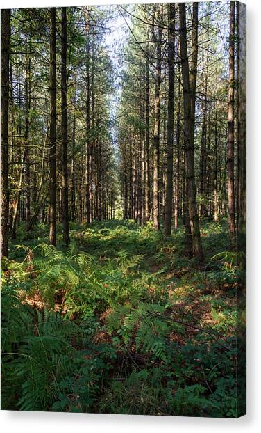 Canvas Print featuring the photograph Tall Trees In Sherwood Forest by Scott Lyons