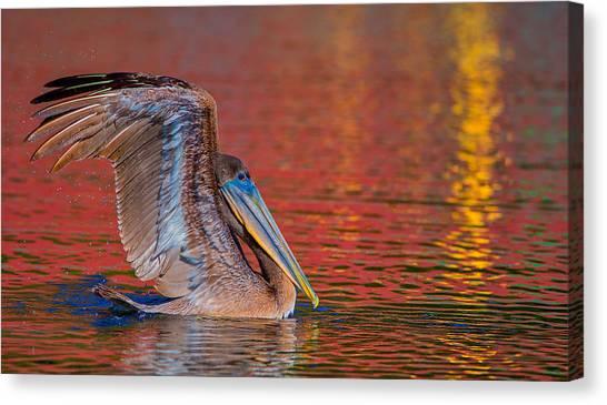 Tchefuncte Pelican Canvas Print