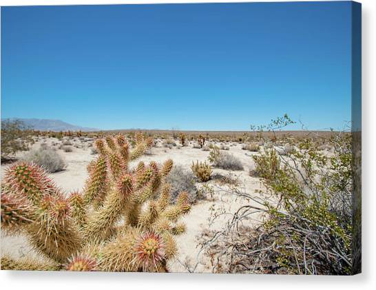 Teddy Bear Cactus Canvas Print