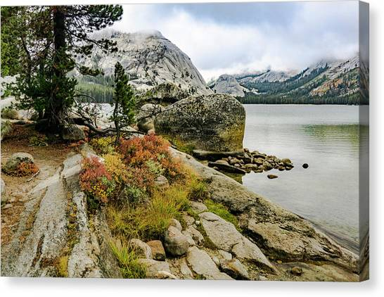 Tenaya View Canvas Print