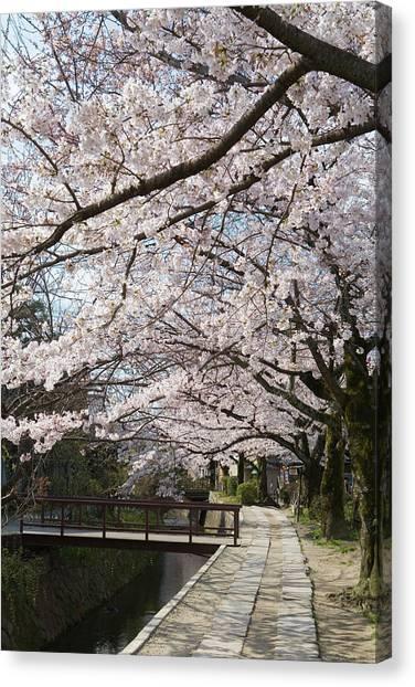 Tetsugakunomichi, Kyoto Prefecture Canvas Print by Daj
