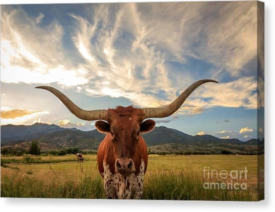 Stunning Canvas Print - Texas Longhorn Steer In Rural Utah, Usa by Johnny Adolphson