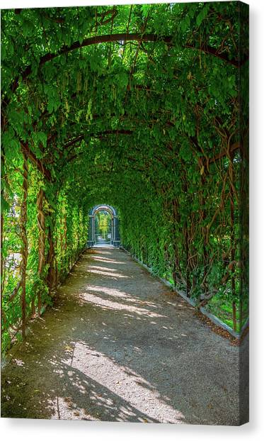 The Alley Of The Ivy Canvas Print