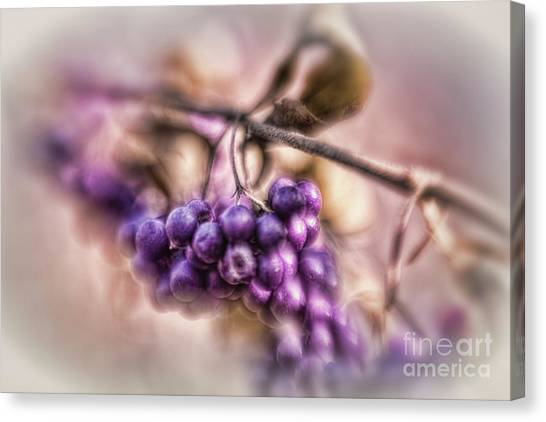 The American Beautyberry Canvas Print