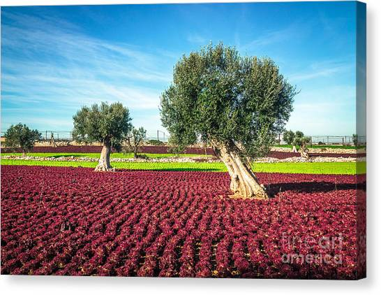 The Beautiful And Colorful Landscapes Canvas Print by Sabino Parente