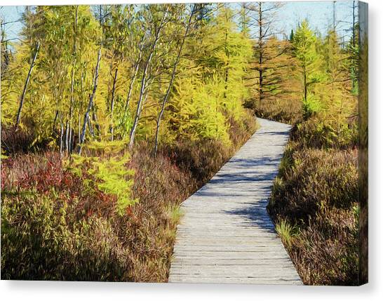 Canvas Print featuring the photograph The Boardwalk At Mer Bleue. by Rob Huntley