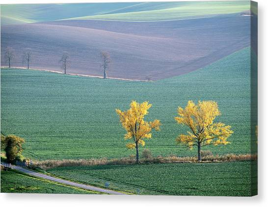 Canvas Print featuring the photograph The Chestnuts Way, Moravia 15 by Dubi Roman