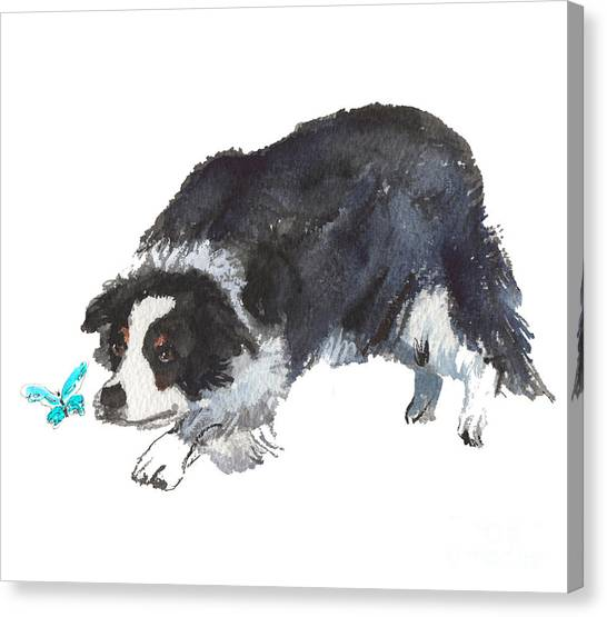 The Collie And Blue Butterfly Canvas Print