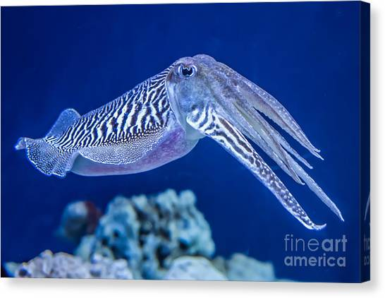 Fish Market Canvas Print - The Common European Cuttlefish Sepia by David Litman