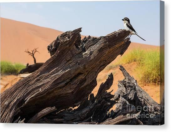 Gobi Canvas Print - The Desert Landscape by Stanislavbeloglazov