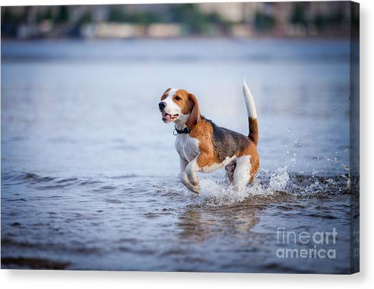 Happiness Canvas Print - The Dog In The Water, Swim, Splash by Dezy