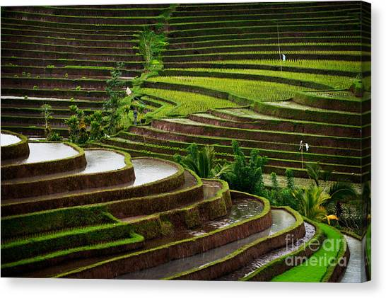 Farmland Canvas Print - The Dramatic And Graphic Rice Terraces by Edmund Lowe Photography
