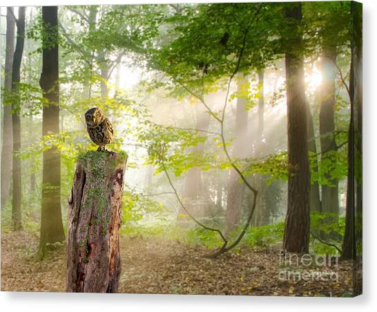 The Enchanted Forrest Canvas Print
