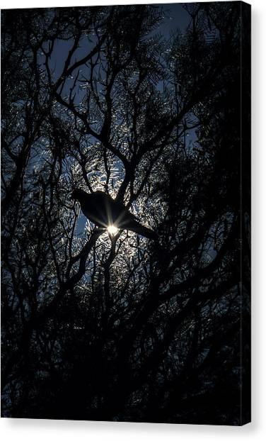 The Enlightened Dove Canvas Print