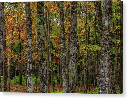 The Fall Woods Canvas Print