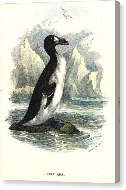 The Great Auk Canvas Print by Hulton Archive