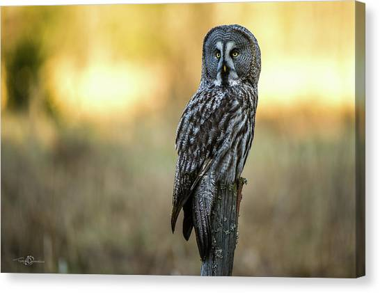 The Great Gray Owl In The Morning Canvas Print