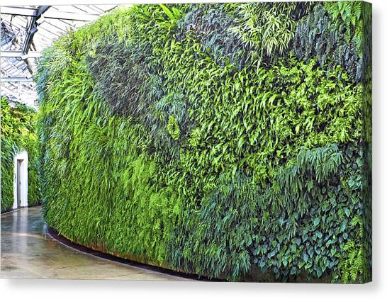 Canvas Print featuring the photograph Leafy Green Wall by Bill Swartwout Fine Art Photography