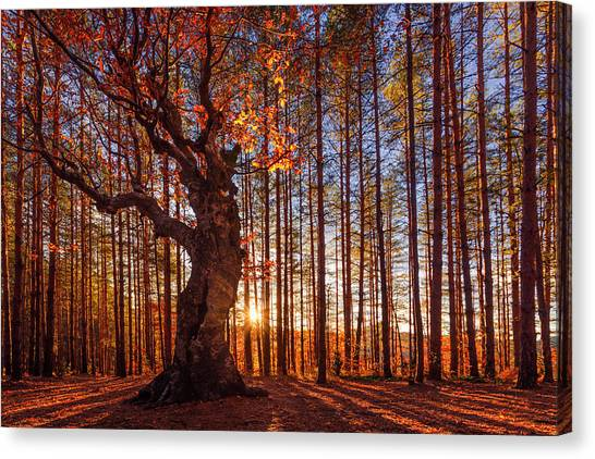 The King Of The Trees Canvas Print