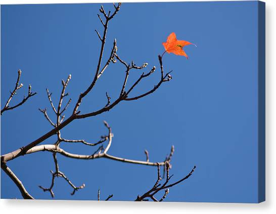 The Last Leaf During Fall Canvas Print
