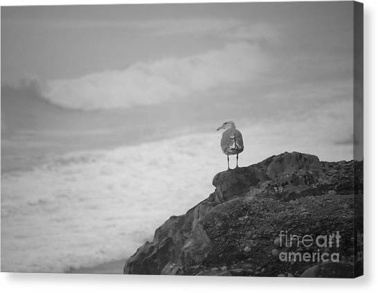 Canvas Print featuring the photograph The Lone Gull by Jeni Gray