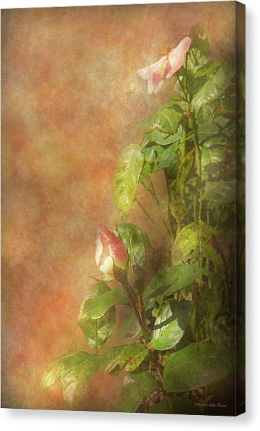 Canvas Print featuring the photograph The Lovely Rose by Mike Savad - Abbie Shores