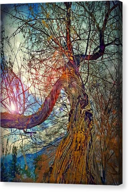 Timeworn Canvas Print - The Offering by Tara Turner