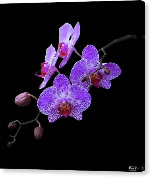 The Orchids Canvas Print