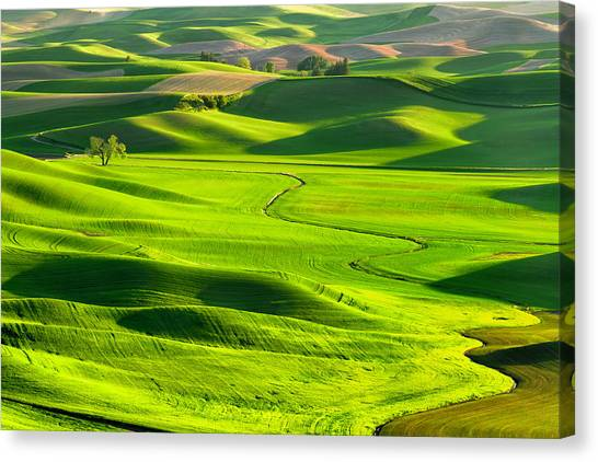 Rolling Hills Canvas Print - The Palouse Rolling Hills by Justinreznick