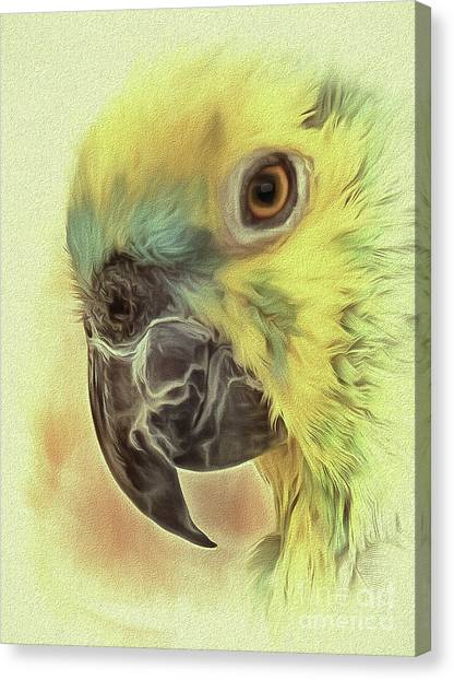 Canvas Print featuring the photograph The Parrot Sketch by Leigh Kemp