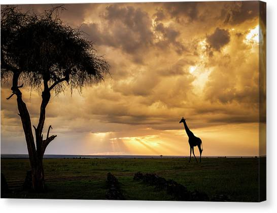 The Plains Of Africa Canvas Print